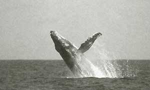 クジラの飛翔